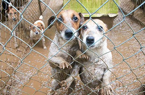 Stop Puppy Mills!