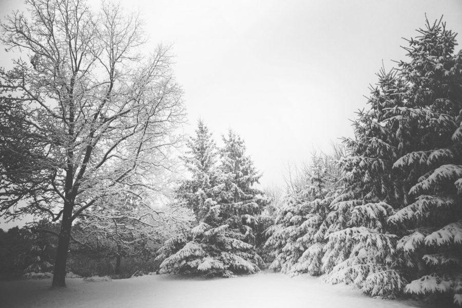 Winter in My Eyes